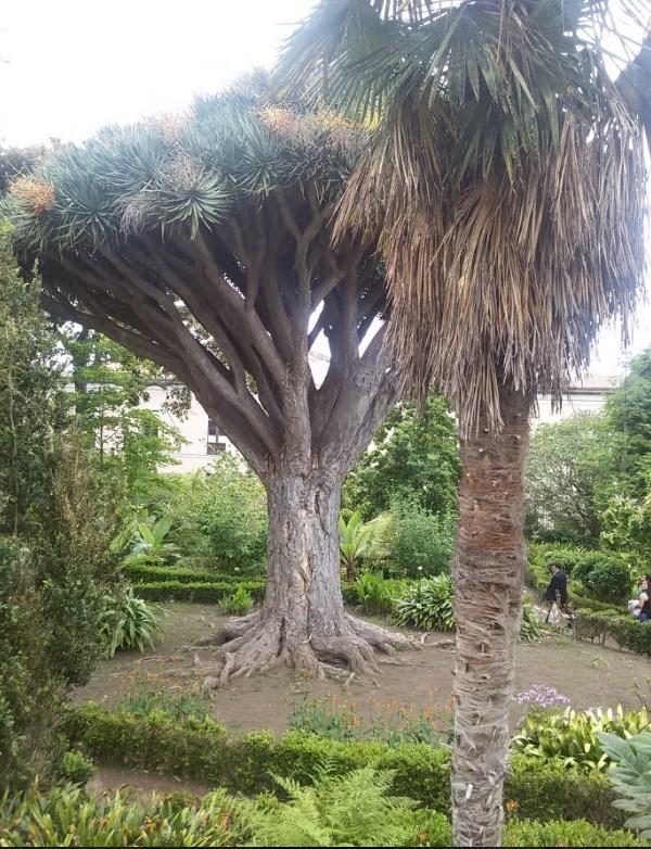 La Orotava - orto botanico